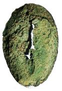 Cowrie (Bronze Imitation) – revers