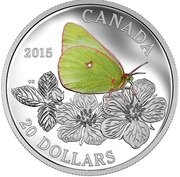 1 oz. Fine Silver Coloured Coin – Butterflies of Canada : Giant Sulphur – Mintage: 10,000 (2015) – revers