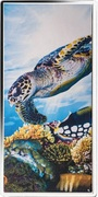 ¼ Dollar - Elizabeth II (Great Barrier Reef) – revers