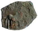 AE unit - Sivamagha I  220-225 AD (Maghas of Kausambi) – avers